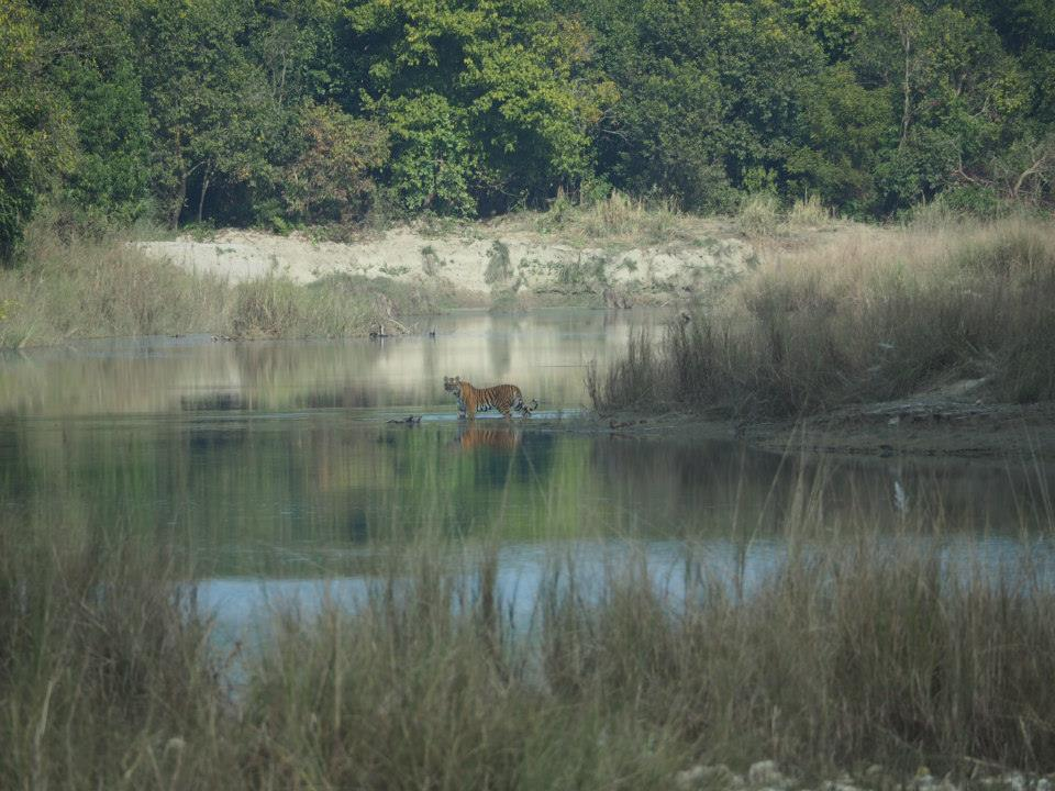 Bardiya National Park (80-150)masl